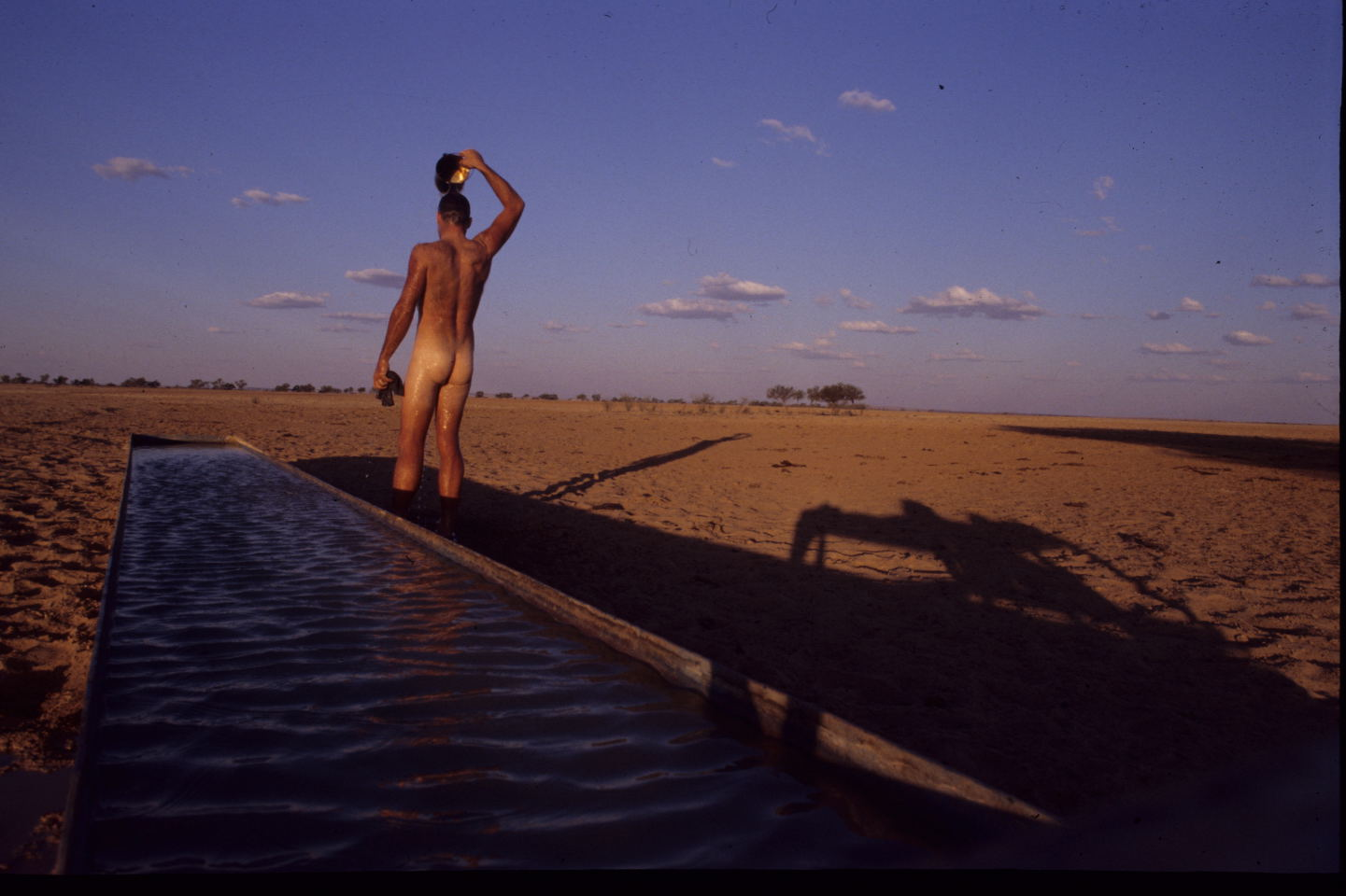 ..time for a wash at a cattle trough, western Queensland.