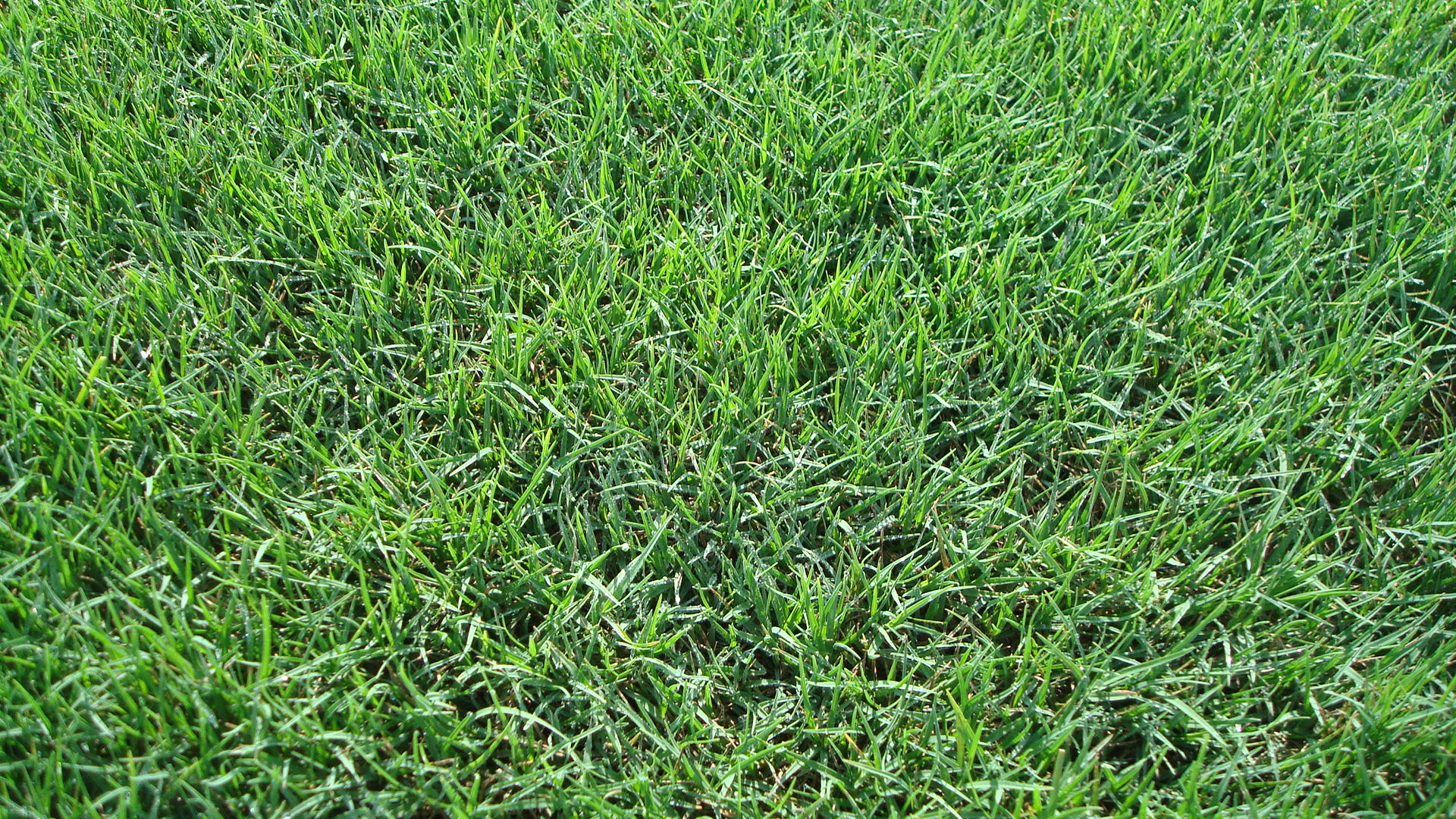 Bermudagrass Common Hulled 95 85 50 Pounds