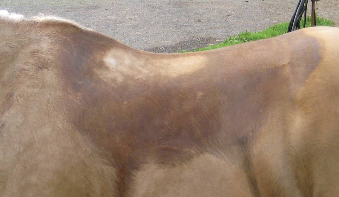 Dry spots in center of back indicate bridging.