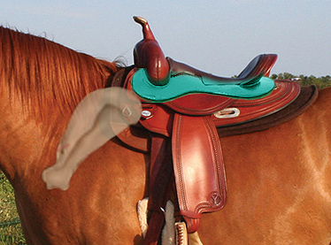 Copper_saddled-with-scapula-bigger-LOWRES.jpg