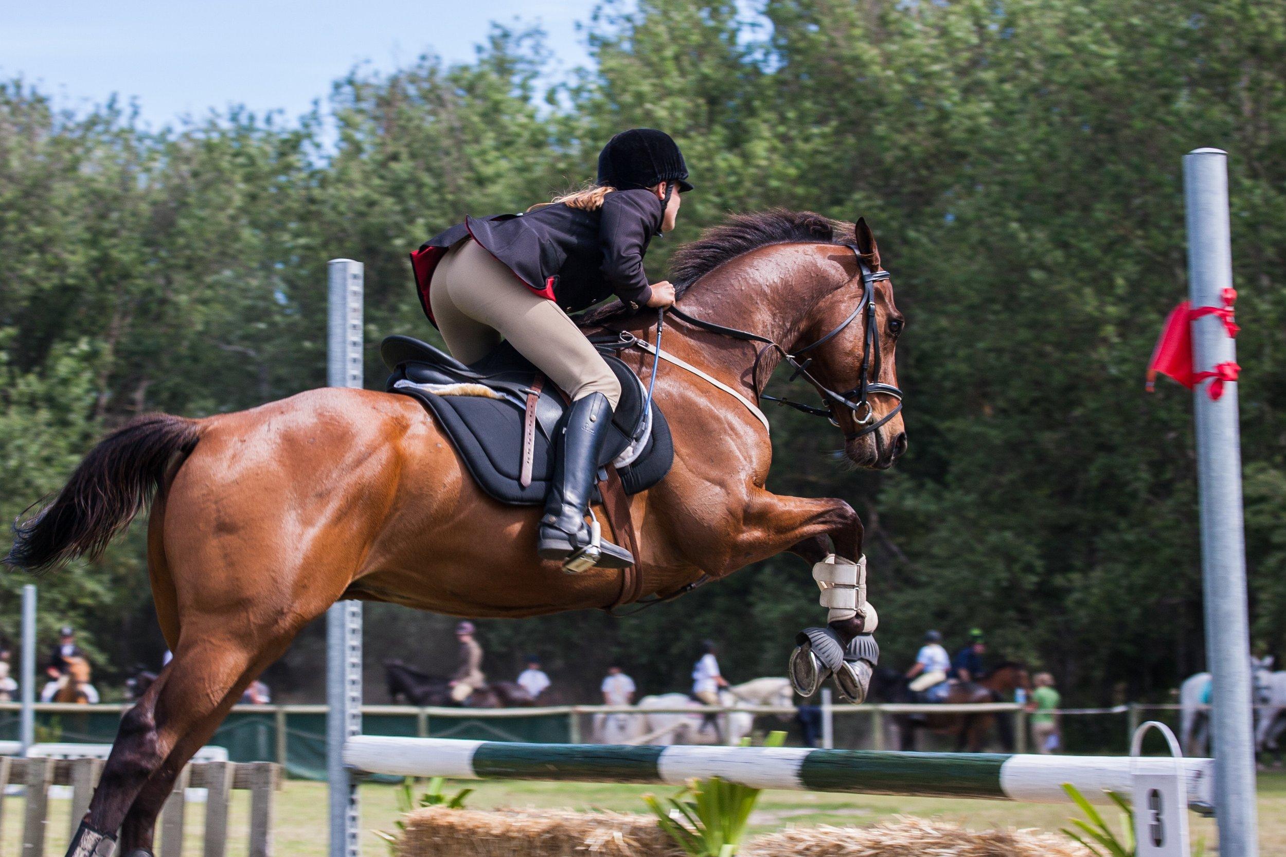 animal-equestrian-equine-1559388.jpg
