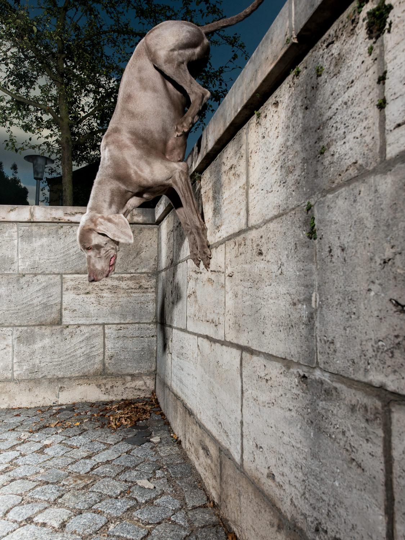 tdp-street dog agility-7.jpg