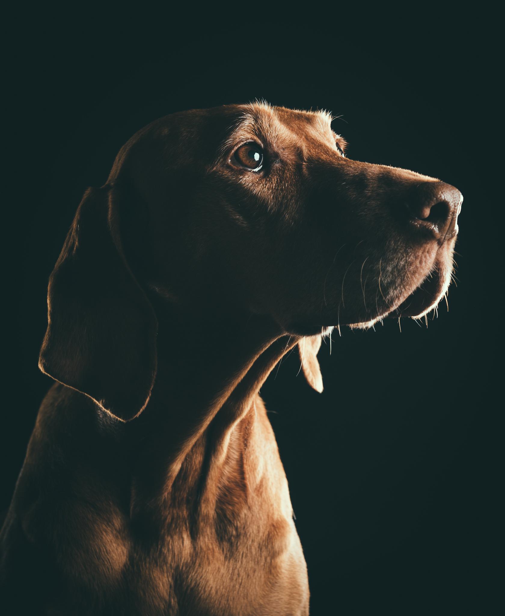 klaus-dyba-dog-photography-viszla