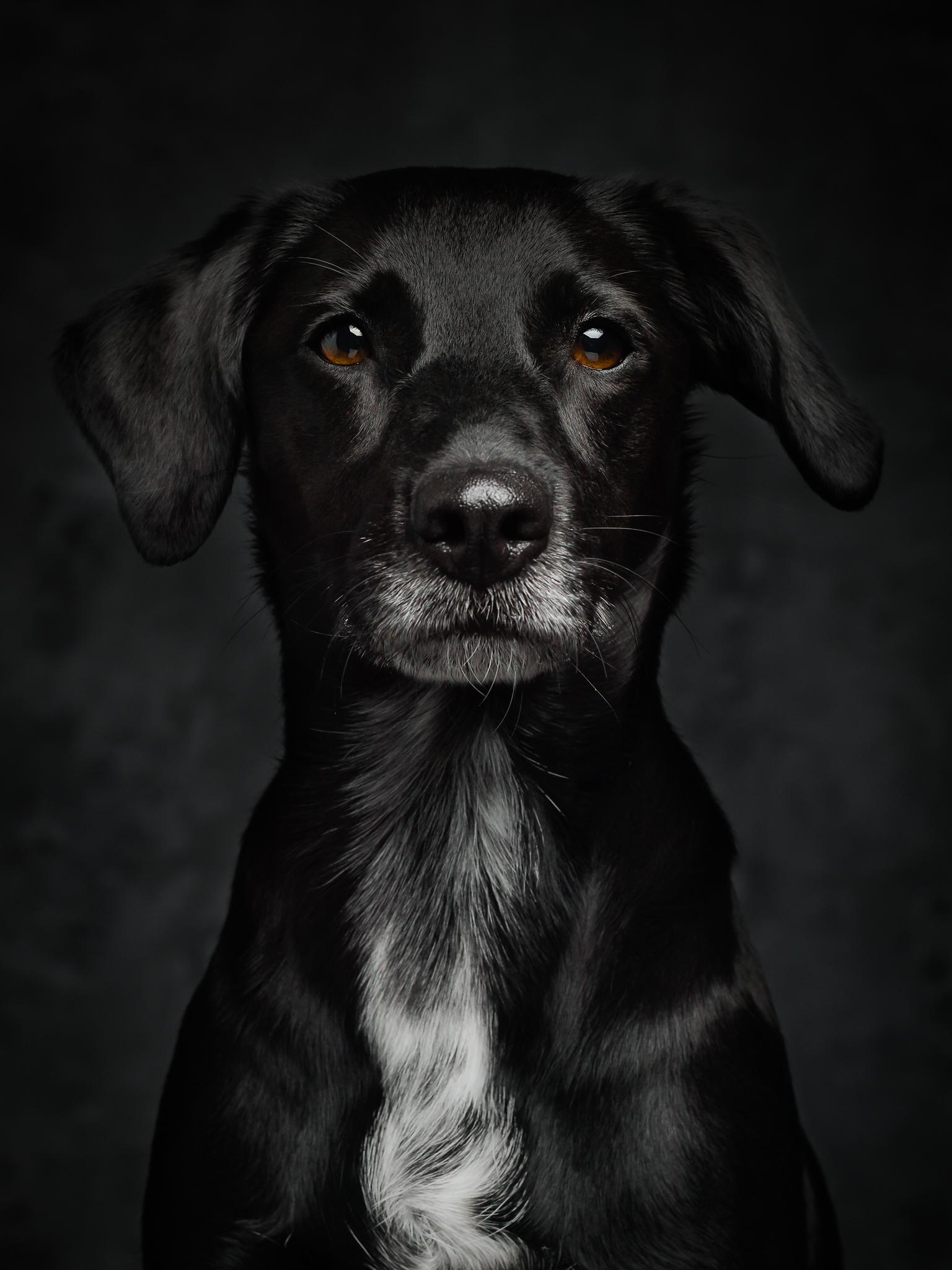 klaus-dyba-dog-photography