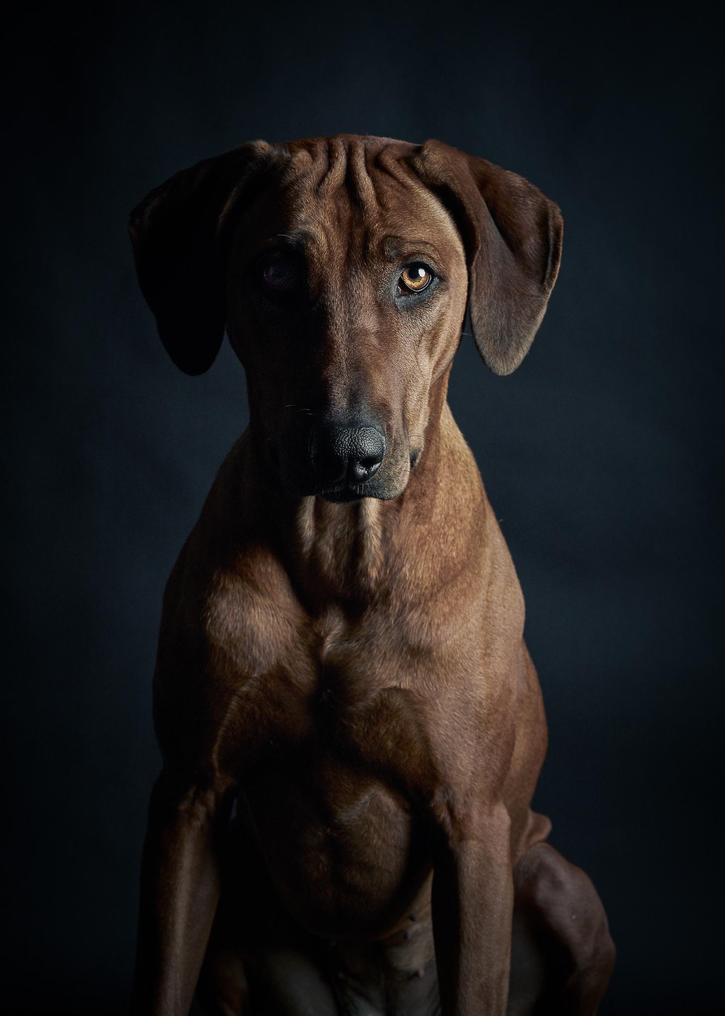 klaus-dyba-dog-photography-1.jpg