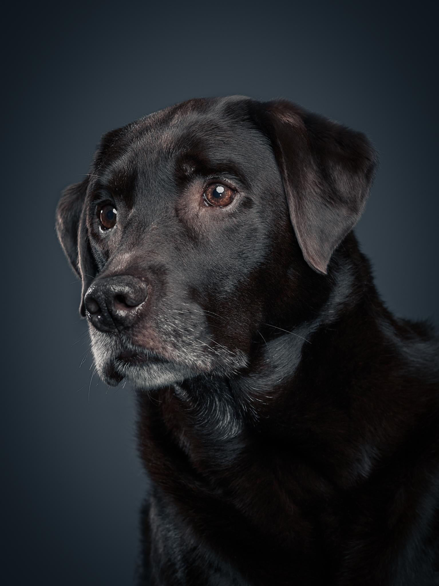 klaus-dyba-dog-photography-5.jpg