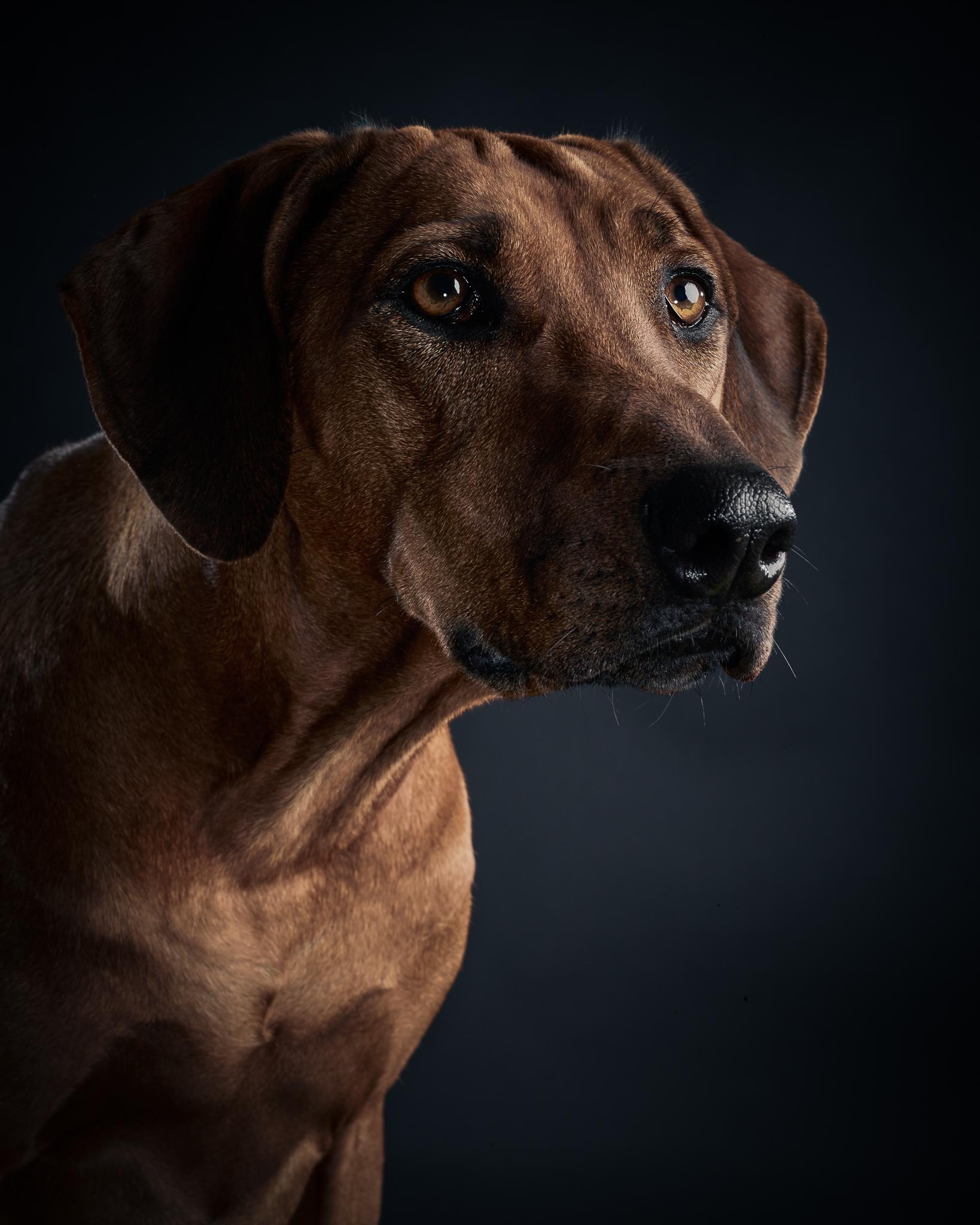 klaus-dyba-dog-photography-4.jpg