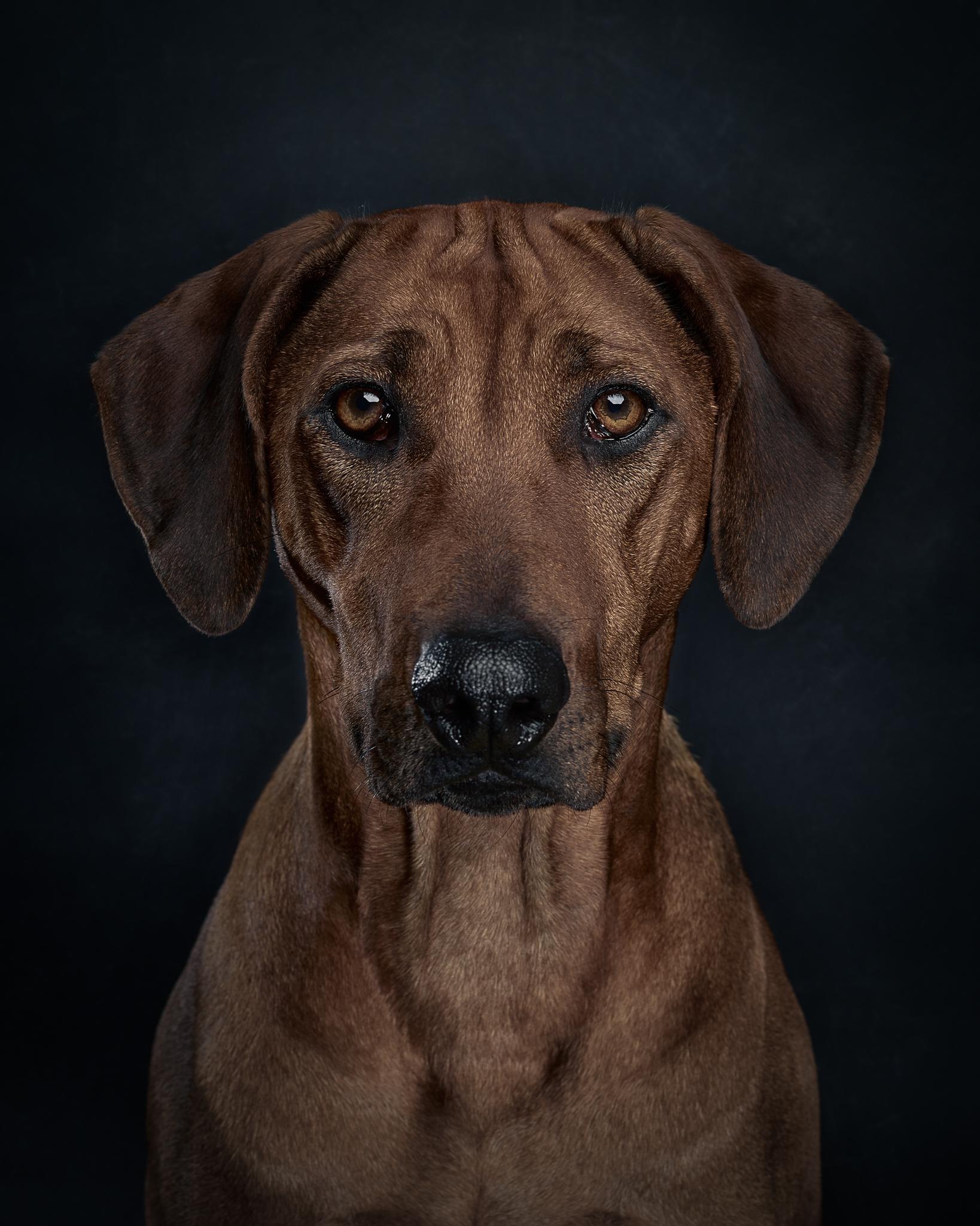klaus-dyba-dog-photography-7.jpg