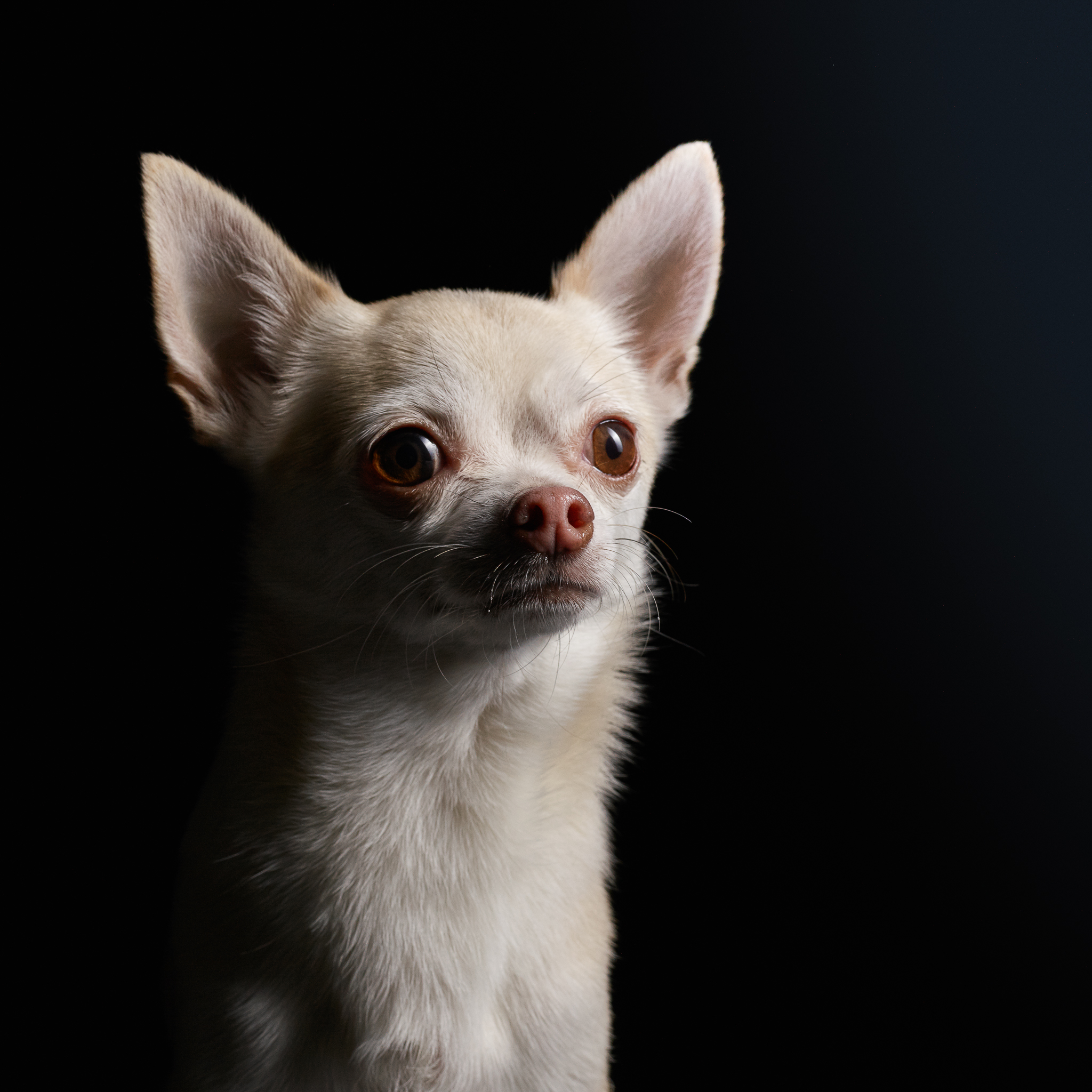 rocco-dog-photography-klaus-dyba