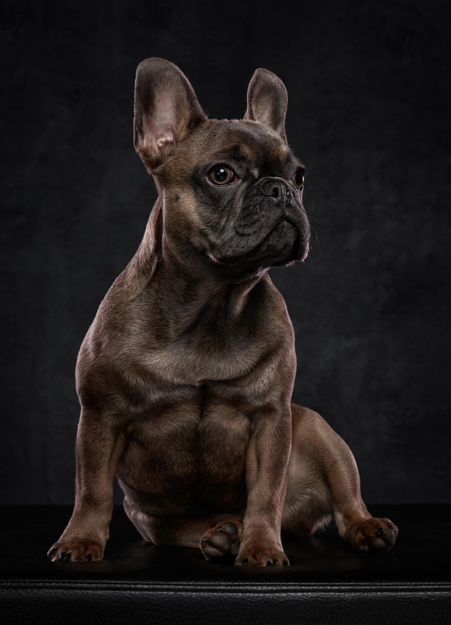 dog-photography-klaus-dyba-2.jpg