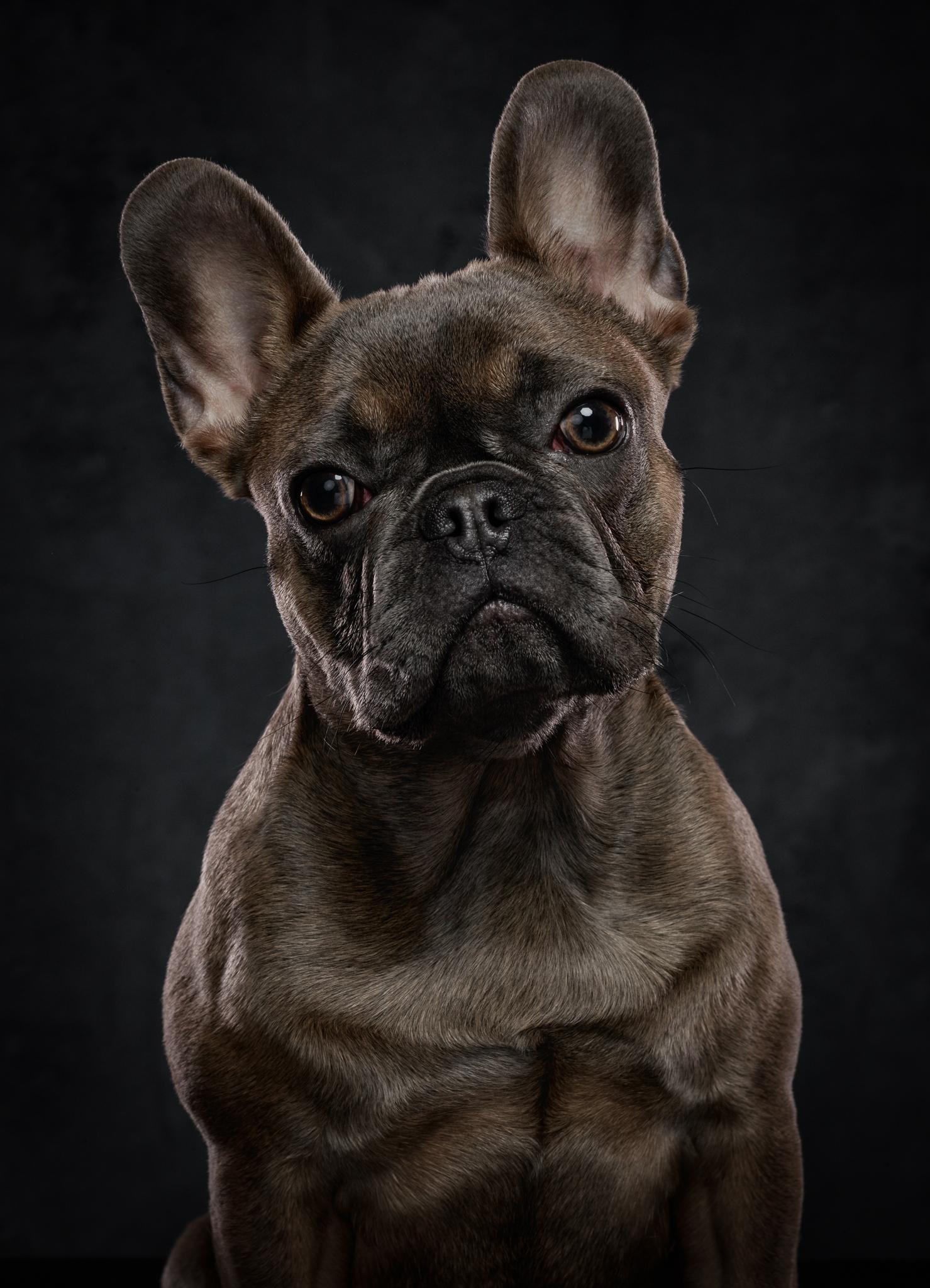 dog-photography-klaus-dyba-1.jpg