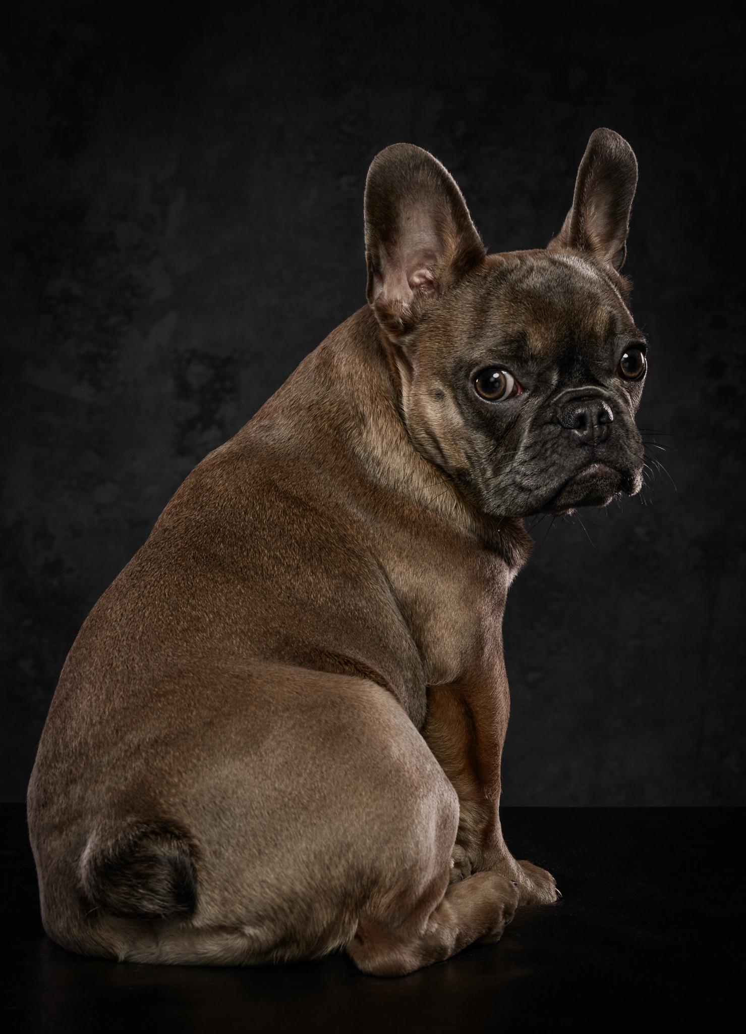 dog-photography-klaus-dyba-3.jpg