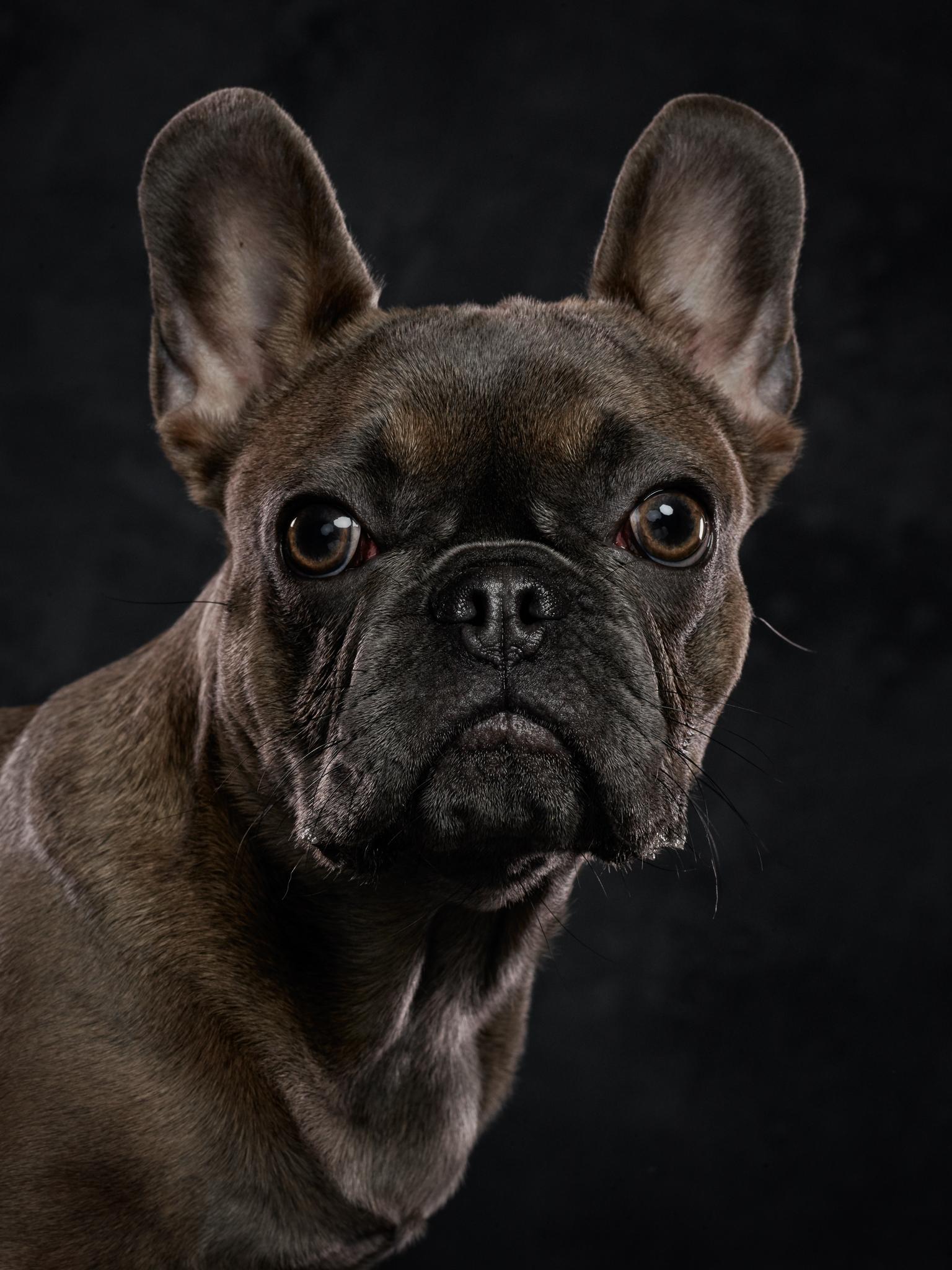 dog-photography-klaus-dyba-5.jpg