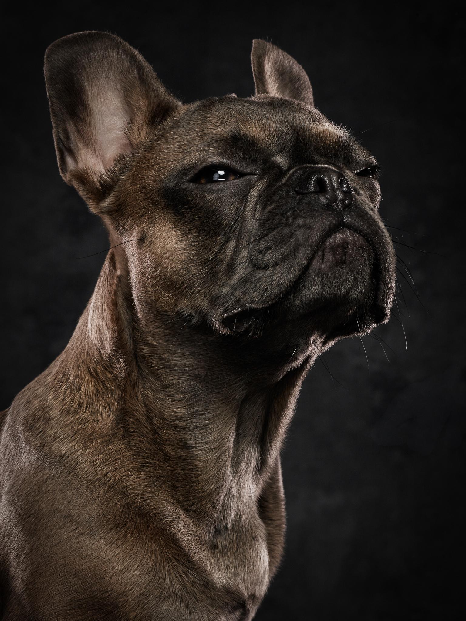 dog-photography-klaus-dyba-4.jpg