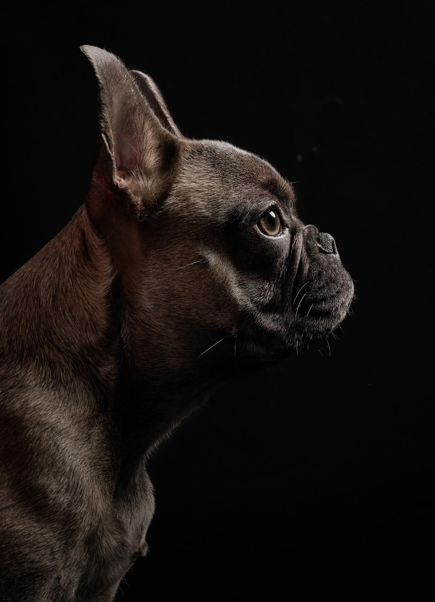 dog-photography-klaus-dyba-7.jpg