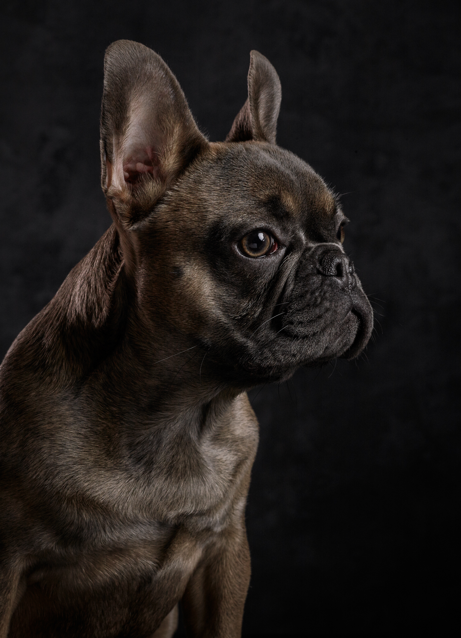 dog-photography-klaus-dyba-6.jpg
