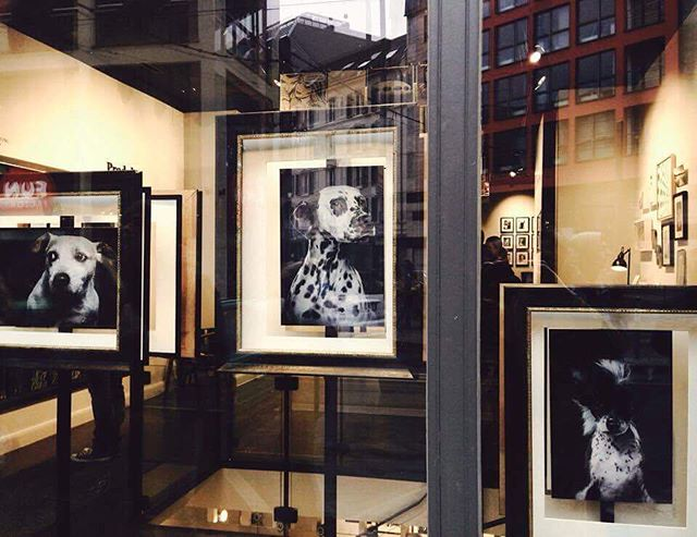 Window @whitewall store Berlin @whitewall_lab #dogs #hunde #dogphotography spotted by ritaheinz