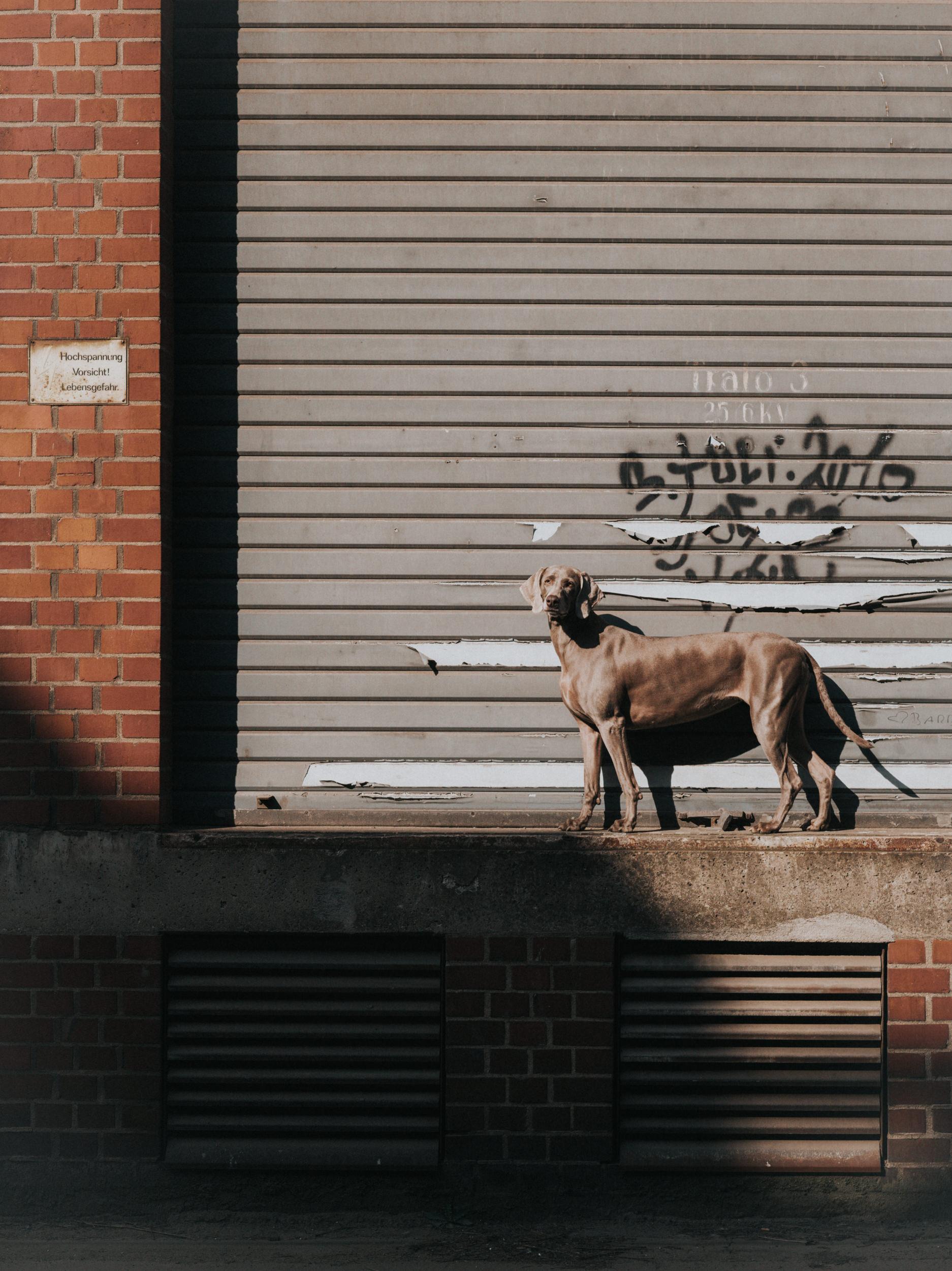outdoor-dogs-klausdyba-12.jpg
