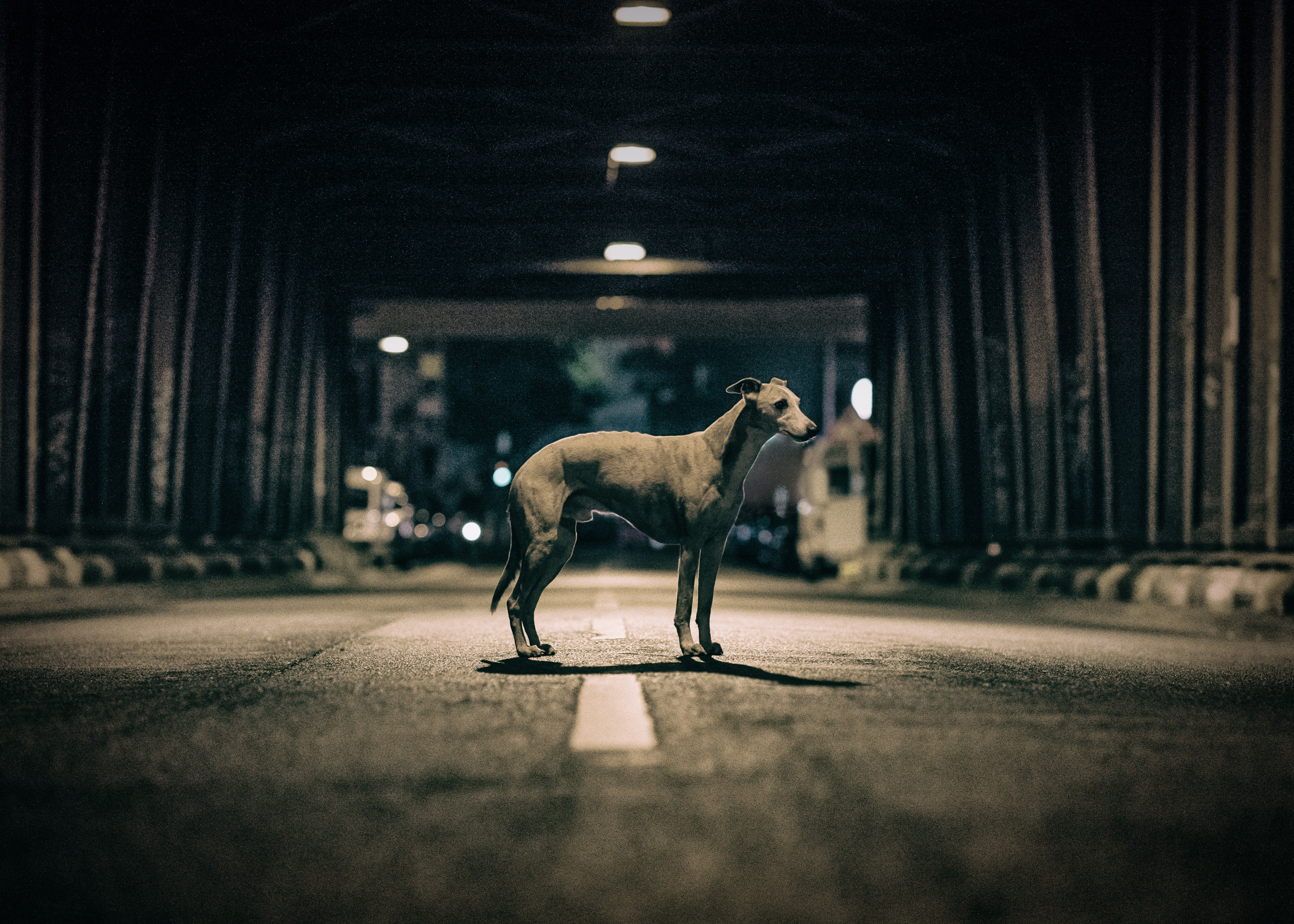 outdoor-dogs-klausdyba-15.jpg