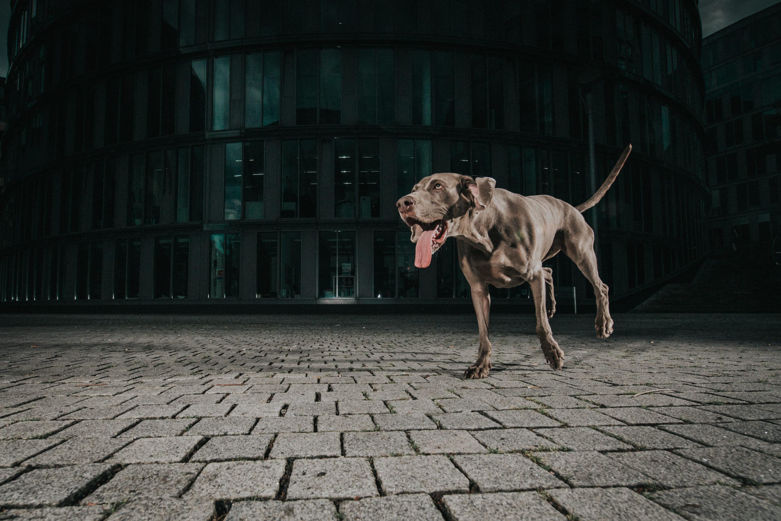 outdoor-dogs-klausdyba-2.jpg