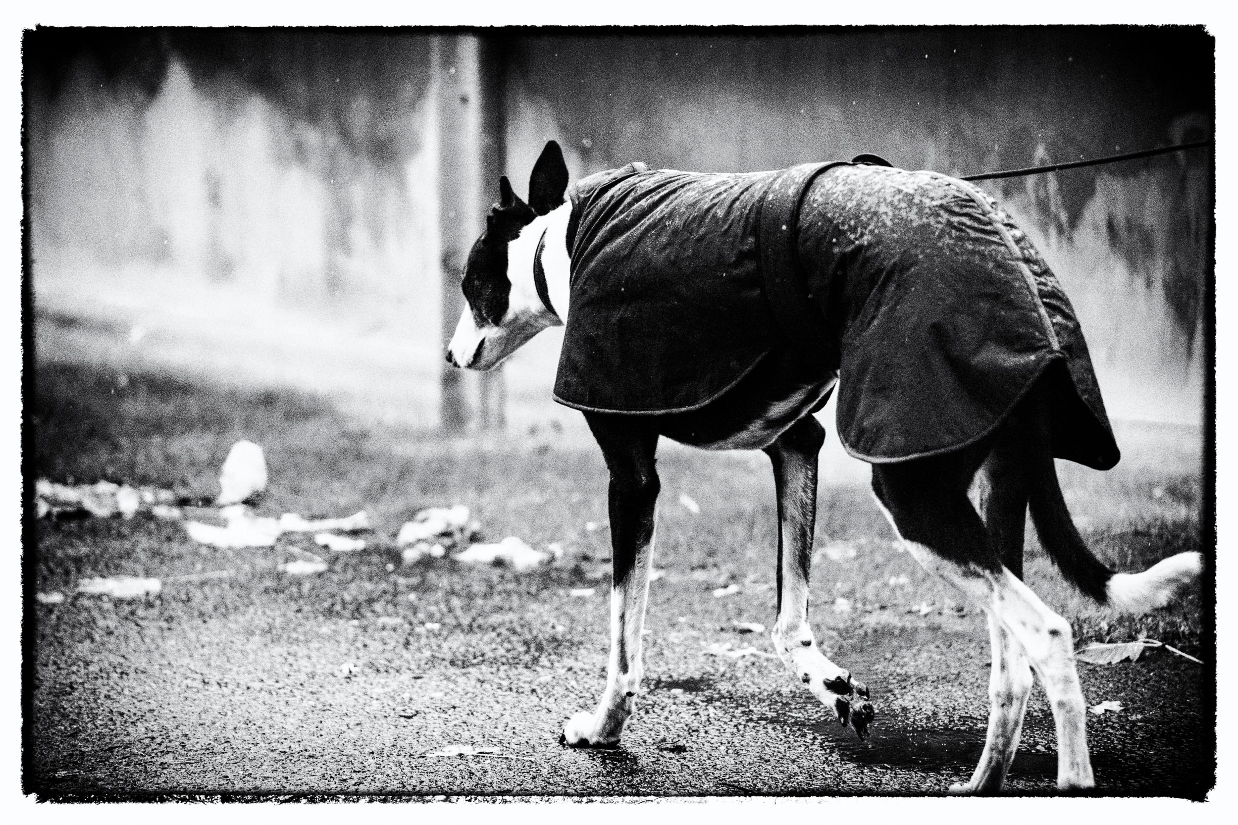 klaus-dyba-hunderennen-dograce-9.jpg