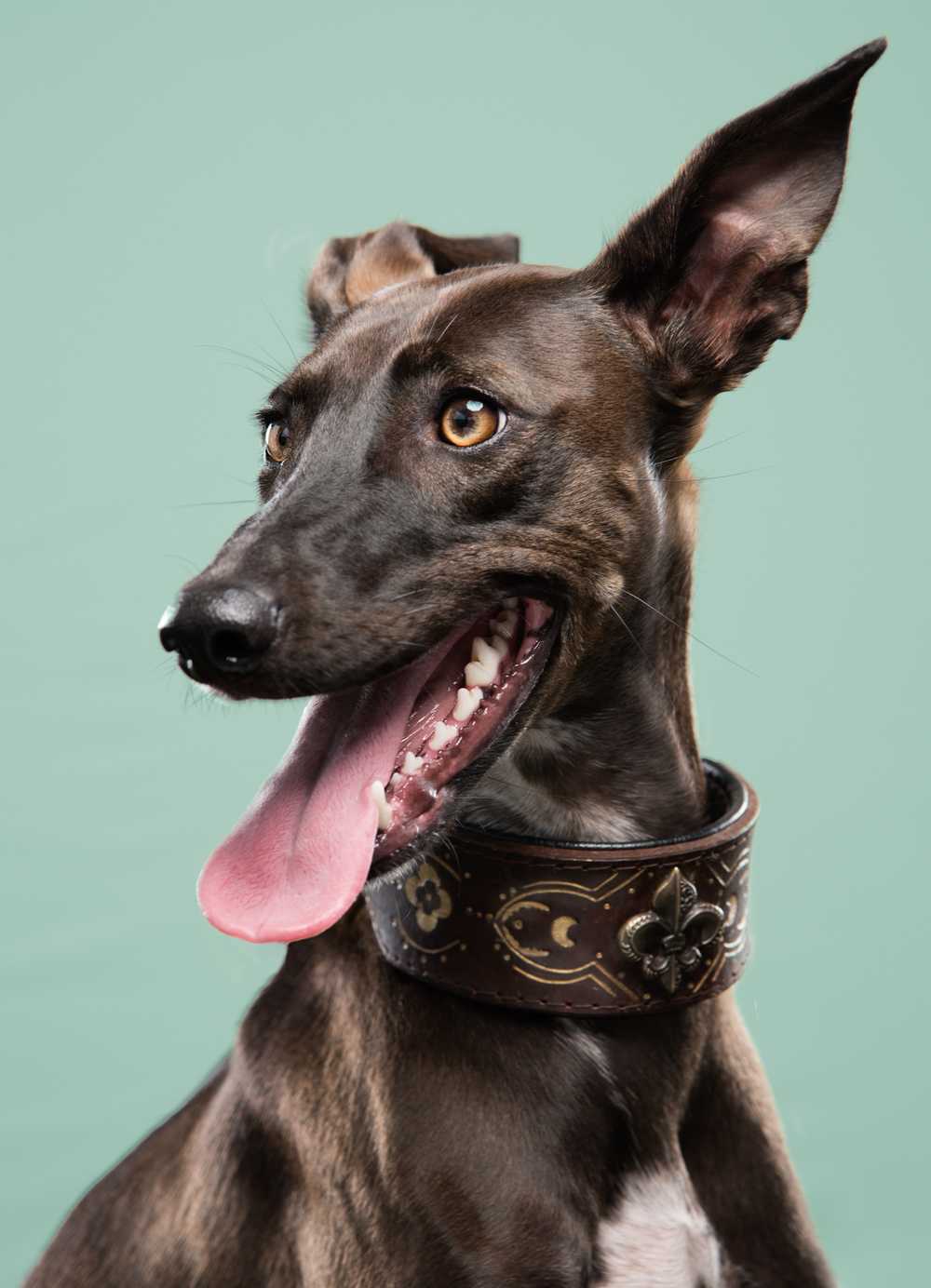 studio-dogs-klausdyba-47.jpg