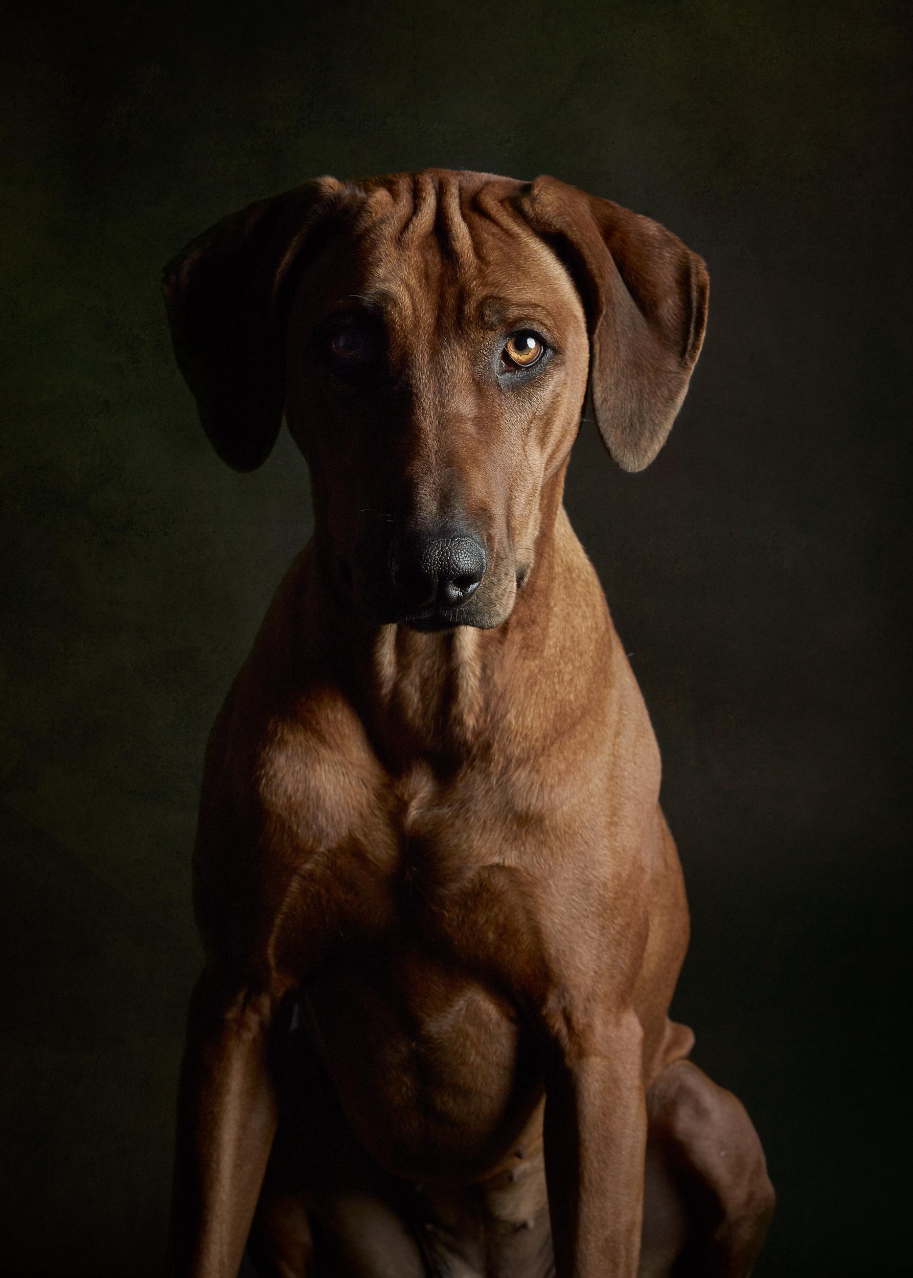studio-dogs-klausdyba-6.jpg