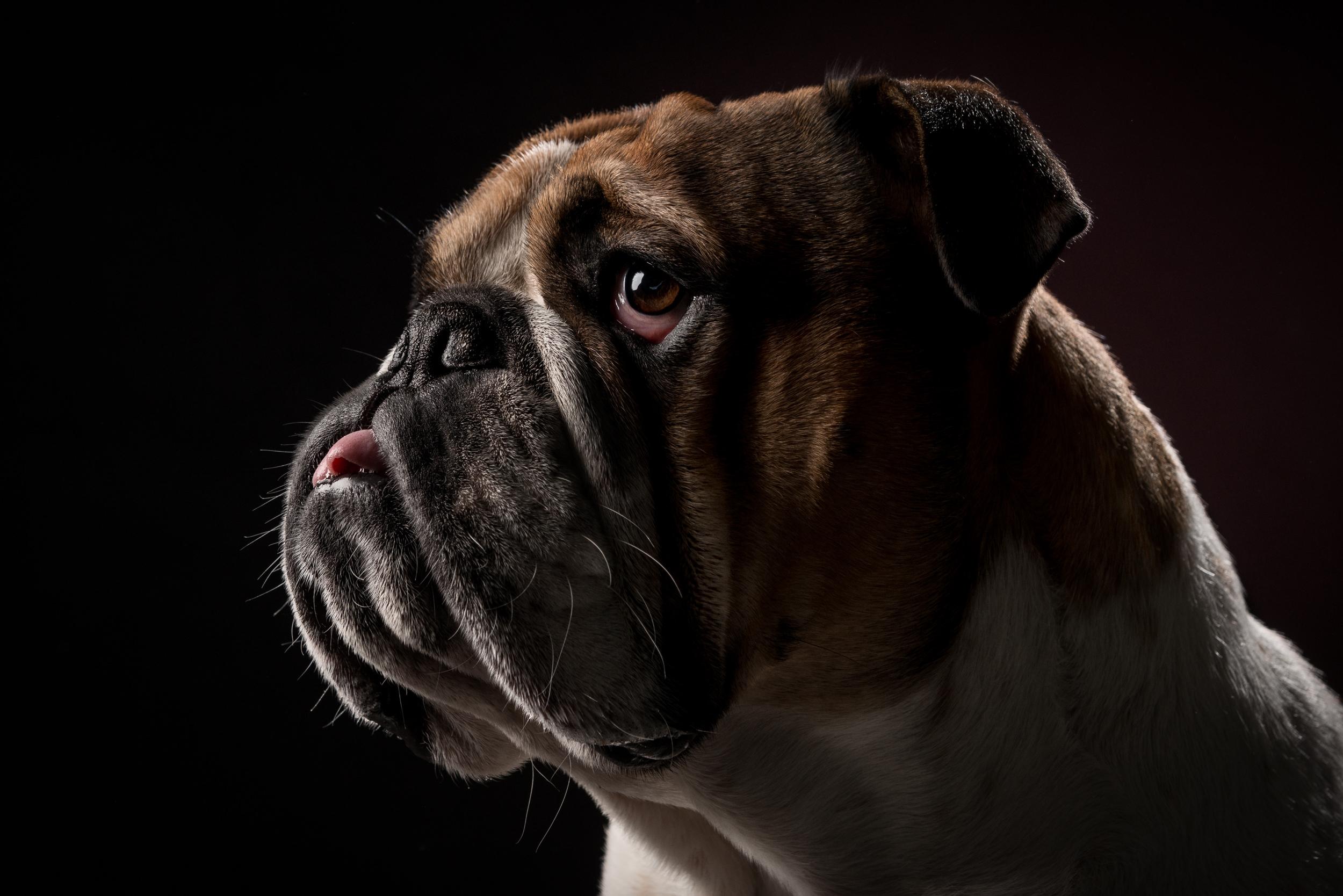studio-dogs-klausdyba-12.jpg