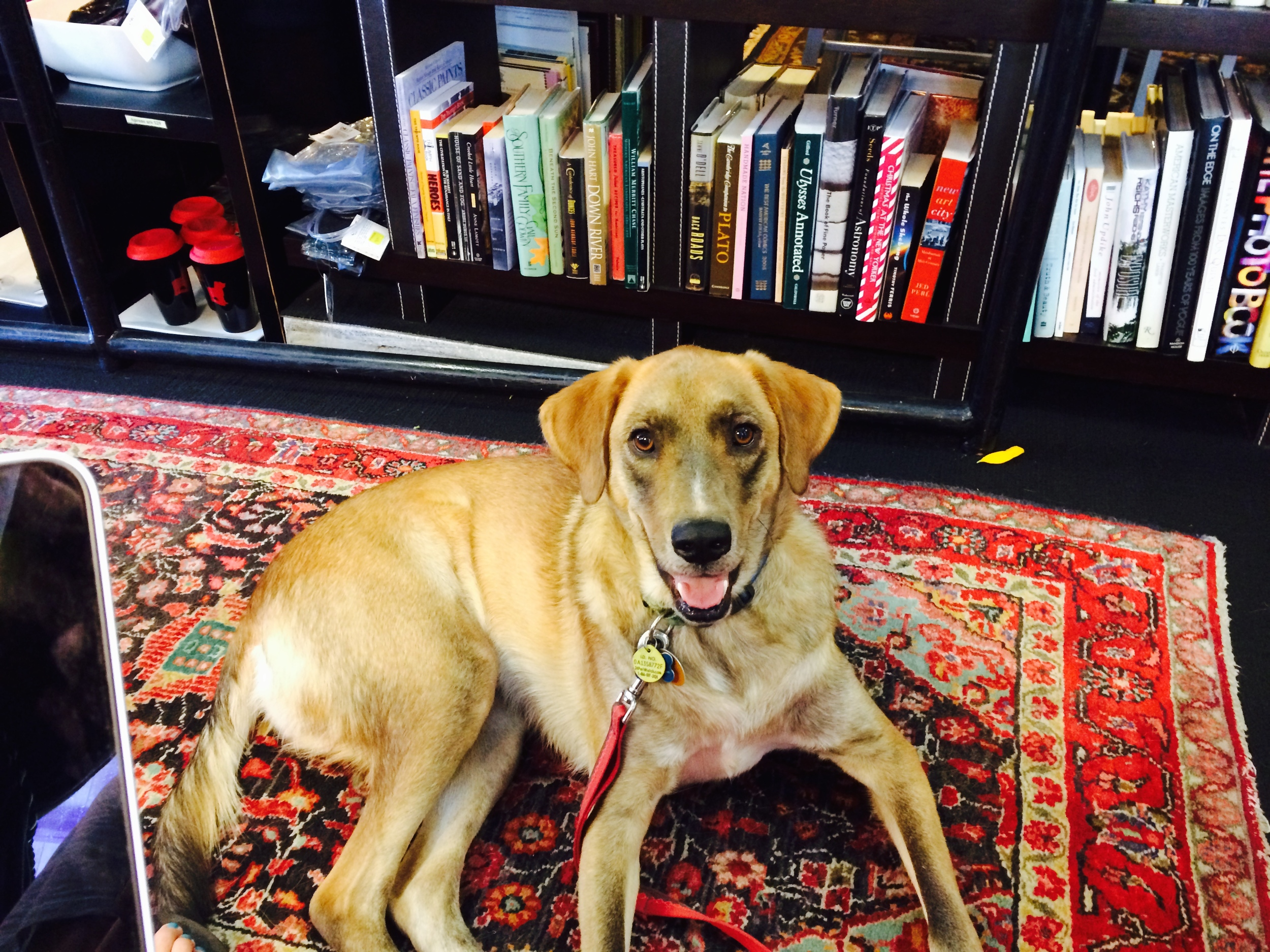 "S ometimes I bring my dog Hugo to counseling sessions. Here are the top 10 reasons why:     *He loves you. How can you not feel better?    *He's still a bit of a puppy (in a big-dog body), and his playfulness is a great reminder that we all need to take ourselves less seriously sometimes.    *Having an animal in the room is a connection to nature, to our deeper, primal, ""wild"" selves, the part of us that isn't staring at a glowing screen or doing 15 tasks at once.    *Petting a dog lowers blood pressure and triggers humans' relaxation response.    *He's an icebreaker. Sometimes walking into a counseling session for the first time and sitting across from a therapist can be a bit intimidating, but Hugo naturally breaks down any tension and increases connection from the get-go.    *Hugo provides the perfect opportunity for me to illustrate setting healthy boundaries with others (i.e. when I have to tell him ""No"" and ""Stop that"" as he pulls tissues out of the trash or tries to sneak up onto the couch). There are many parallels between interacting with dogs and interacting with people (just ask the Dog Whisperer!).     *He is a wonderful example of how anyone can be lovable, even with imperfections. (Yep, he sheds, and farts, and squirms at the wrong times, but he is adorable just as he is.    *He is a natural clock, getting up to stretch just as it's time for the session to start winding down.     *He forces me to step outside the office periodically, to soak up a little sunshine (while he empties his bladder) and return to the next session refreshed.    *He doesn't worry about the future, and doesn't agonize about the past. He just is what he is, enjoying his doggy-ness. A monk I once knew said, ""dogs illustrate the doggy nature of God."" He's a reminder to just BE. Woof!"