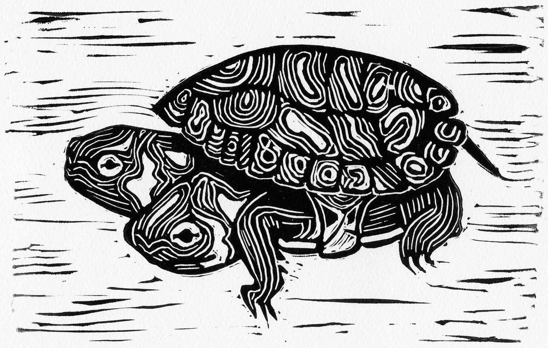 VII turtle.jpg