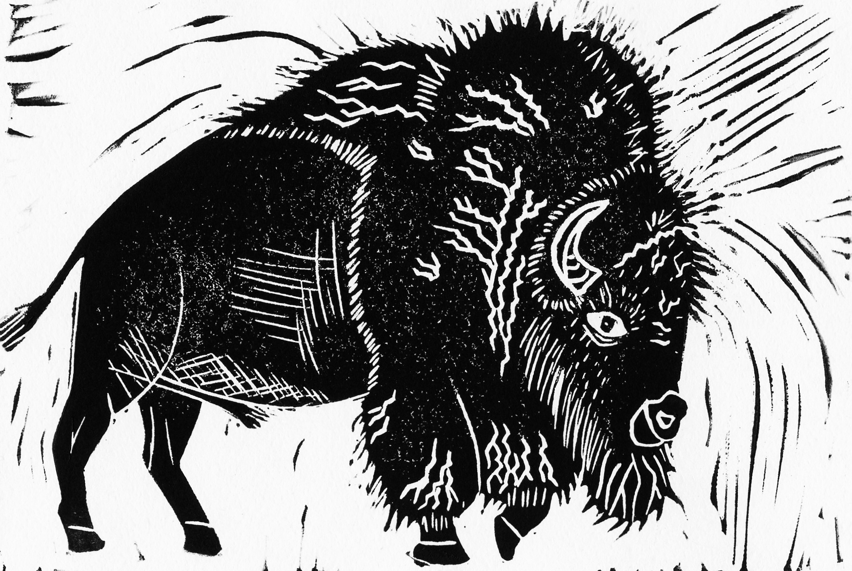 XX bison.jpg