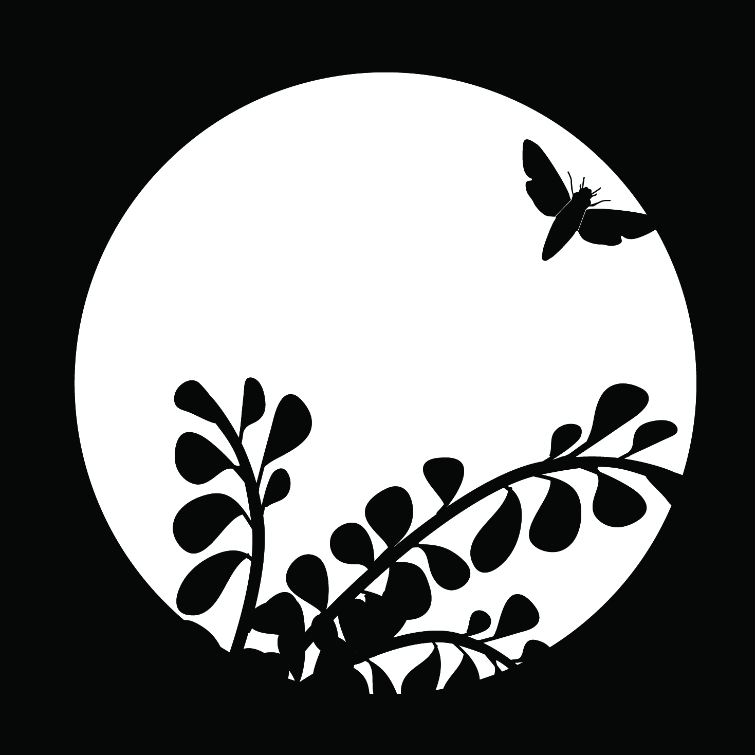 Moth In The Moonlight