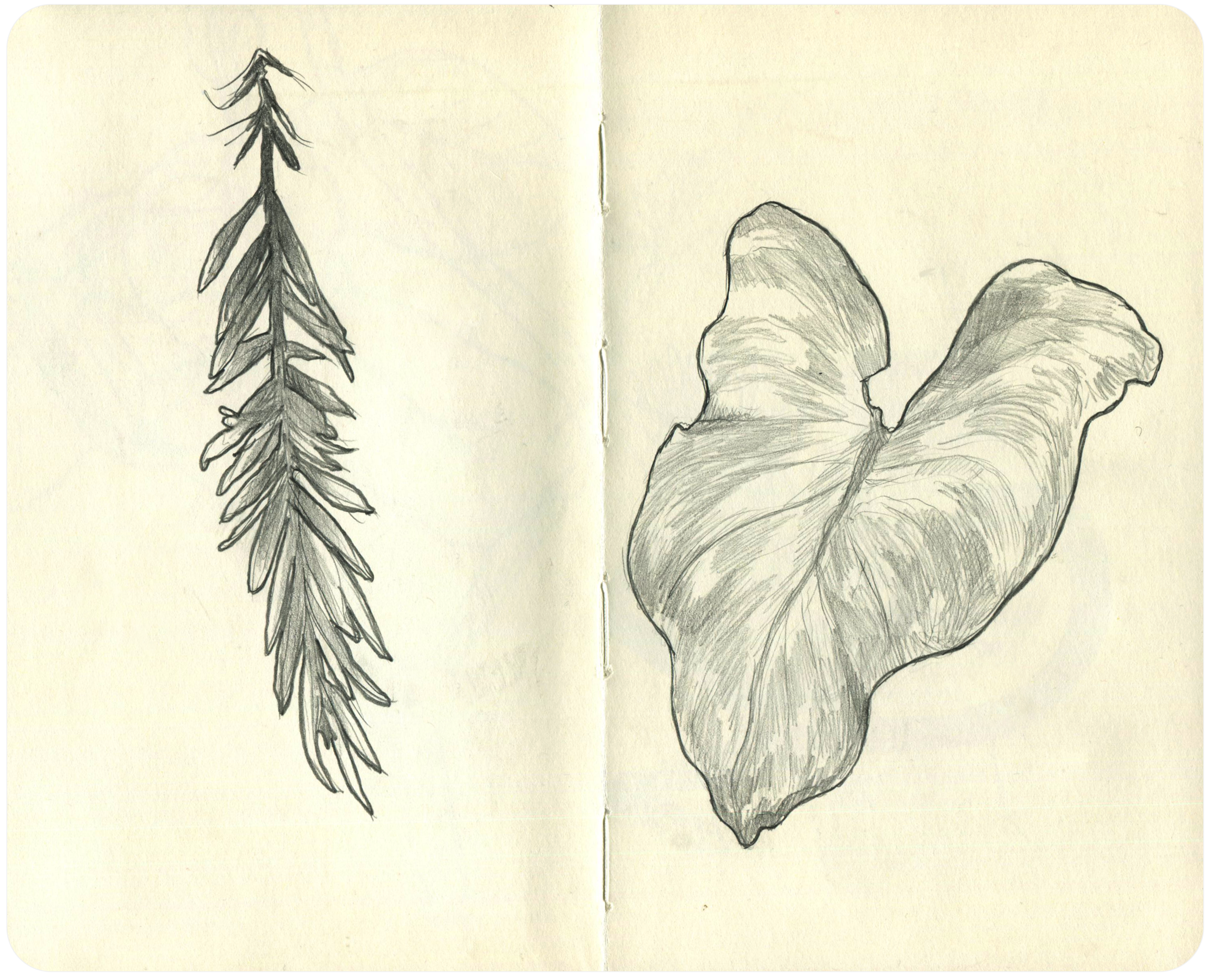 Life drawing sketches from Allan Gardens.