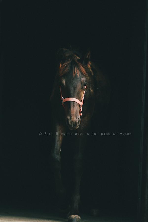 web_cavallo_by+Egle+Berruti.jpg