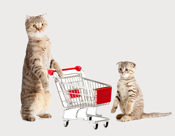 cats-shopping-shopping cart-yelp_0.jpg