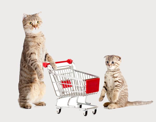 cats-shopping-shopping cart-yelp_0.jpg