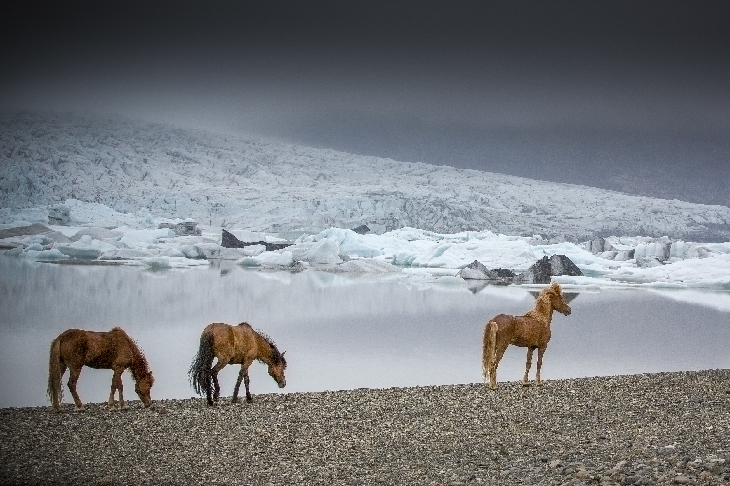 Icelandic Horses at Jokulsarlon