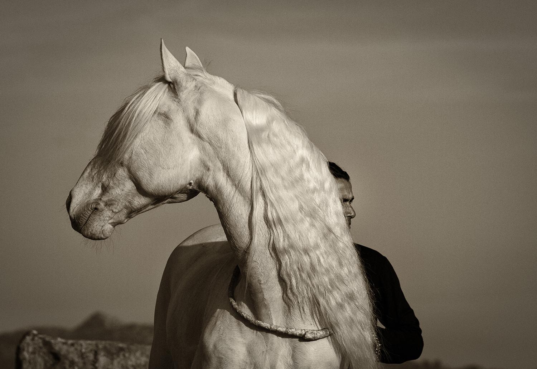 11-manandhorse.jpg