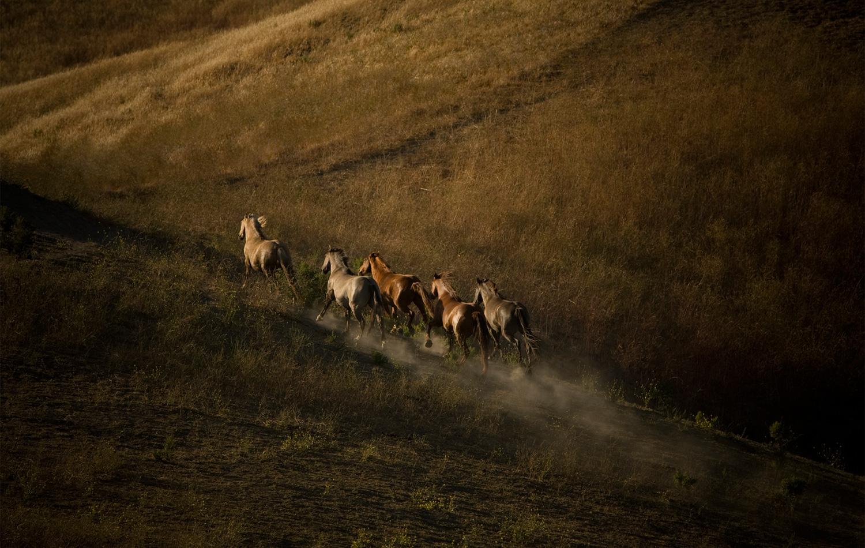 Mustangs, California