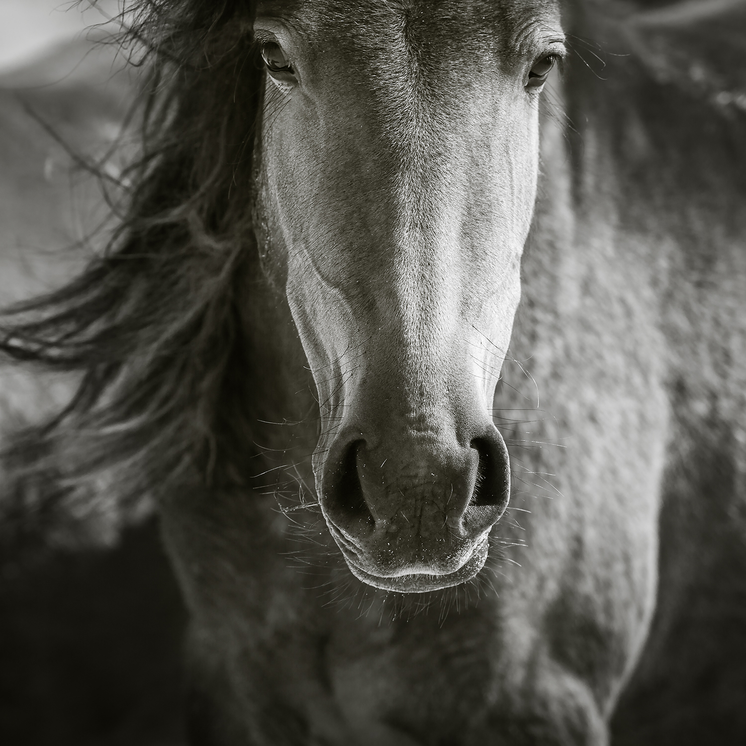 BORN TO BE WILD - Sable Island 2015