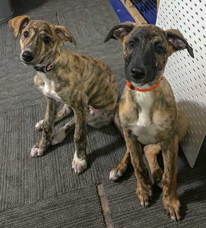 Lizzy and Townes - Our newest additions to the shop dogs