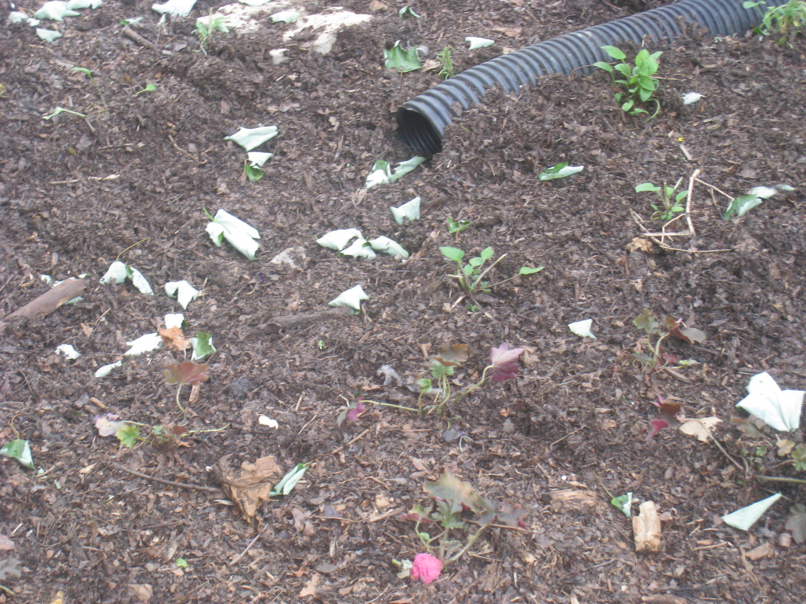 Raingarden to handle porch and mansard roof stormwater
