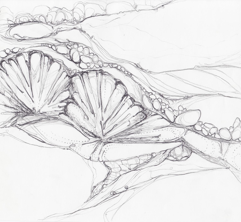 rocks-shell-sketch.jpg
