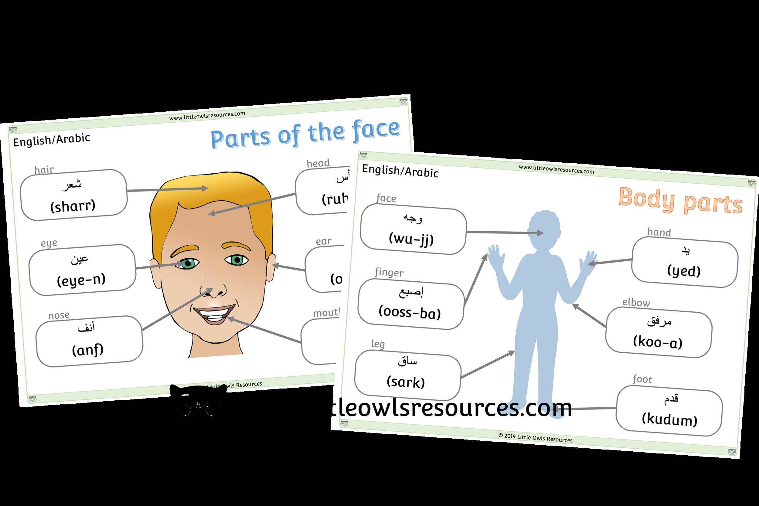 Face & Body Parts Arabic/English - Arabic/English Dual Language Face & Body Part Posters/Display