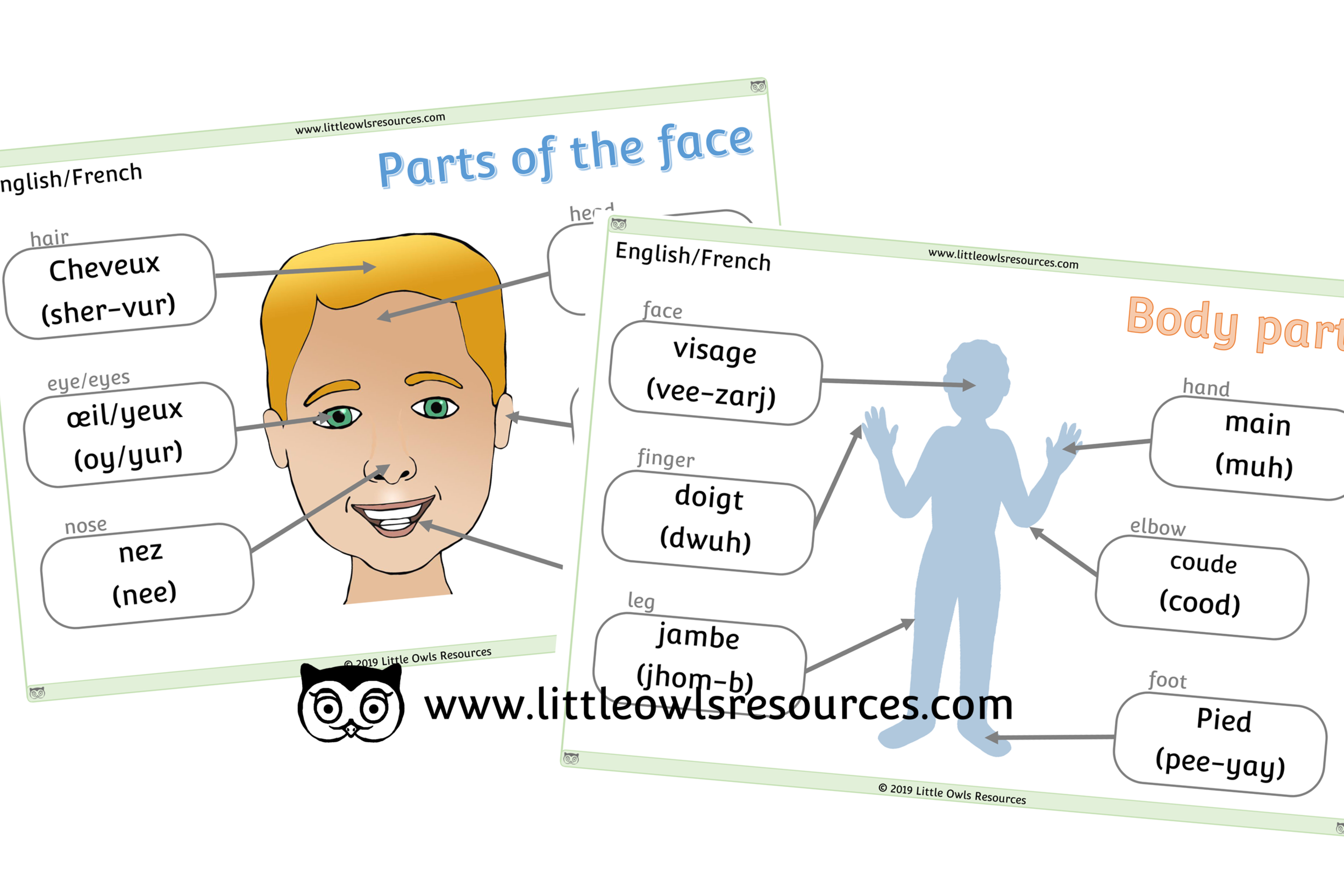 Face & Body Parts French/English - French/English Dual Language Face & Body Part Posters/Display