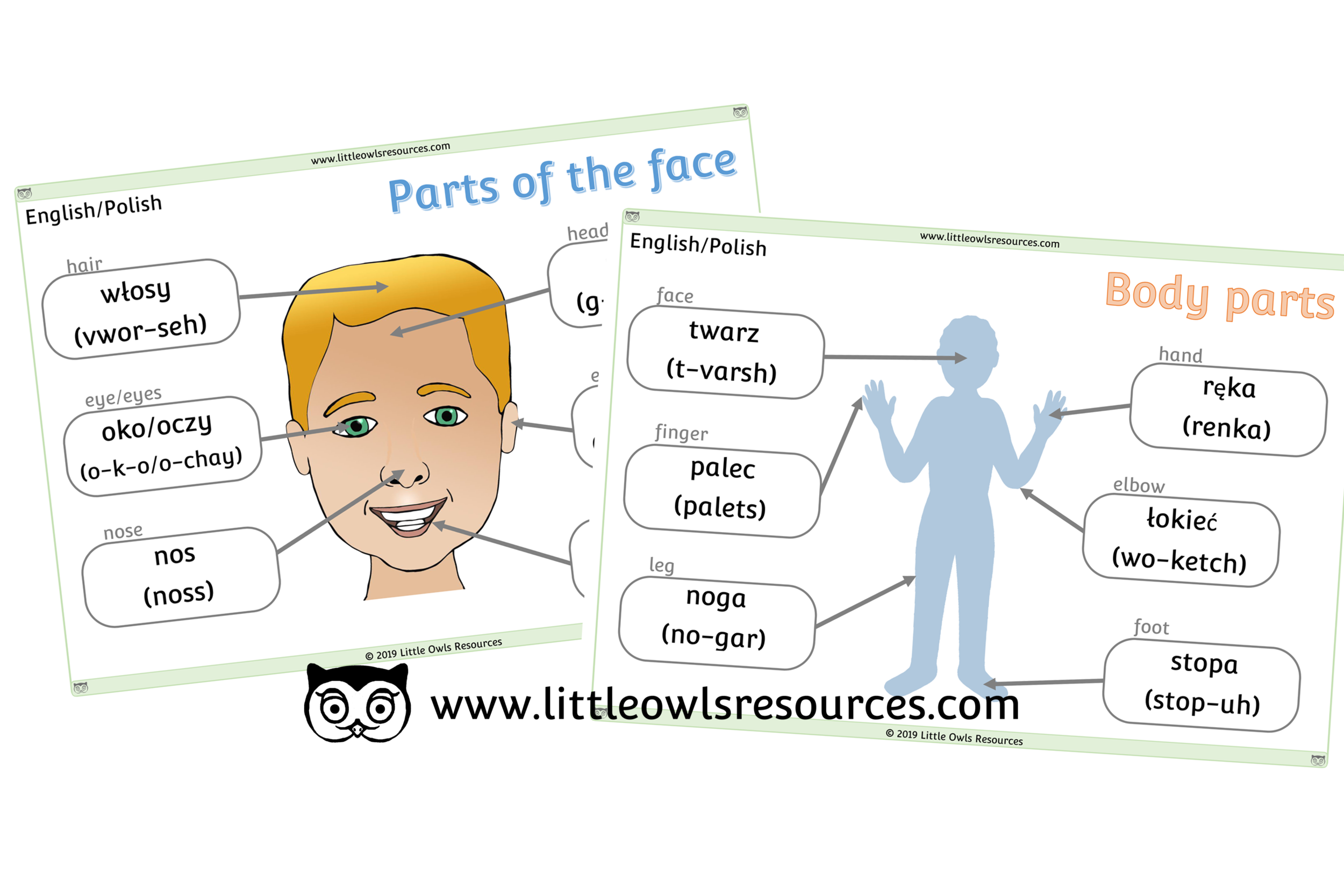 Face & Body Parts Polish/English - Polish/English Dual Language Face & Body Part Posters/Display