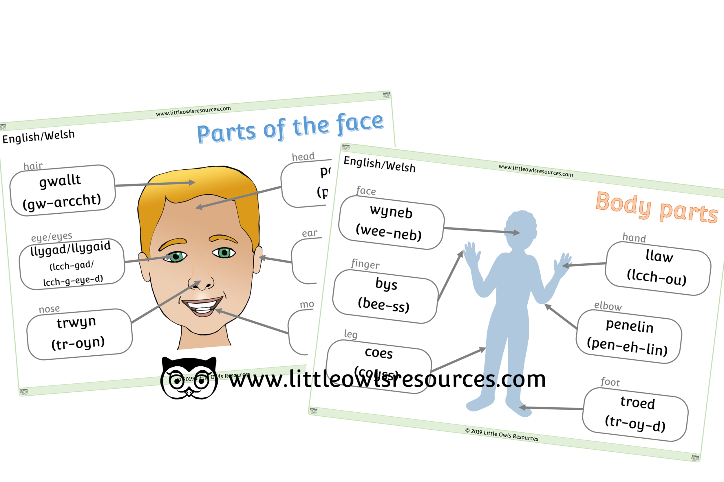 Face & Body Parts Welsh/English - Welsh/English Dual Language Face & Body Part Posters/Display