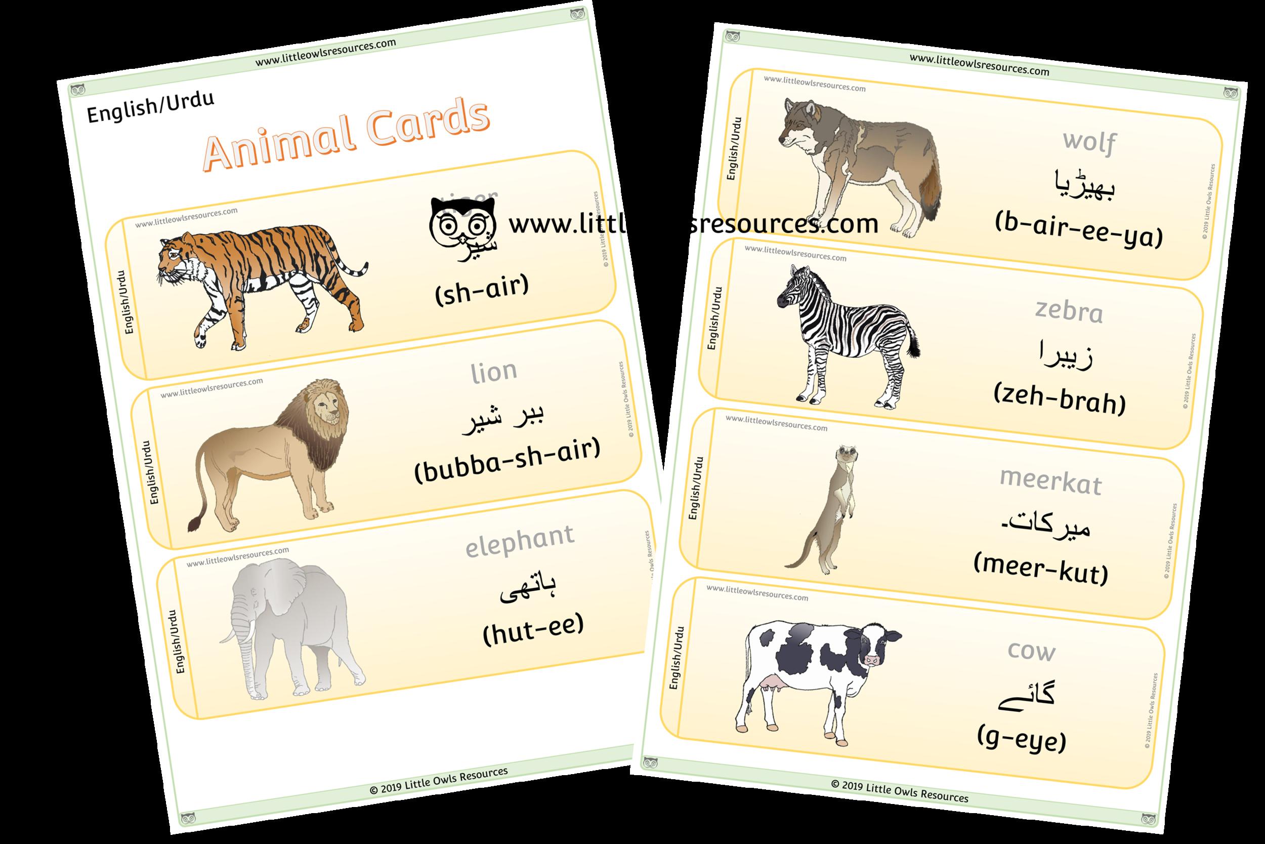 Animals Urdu/English - Urdu/English Dual Language Animal Cards/Posters/Display
