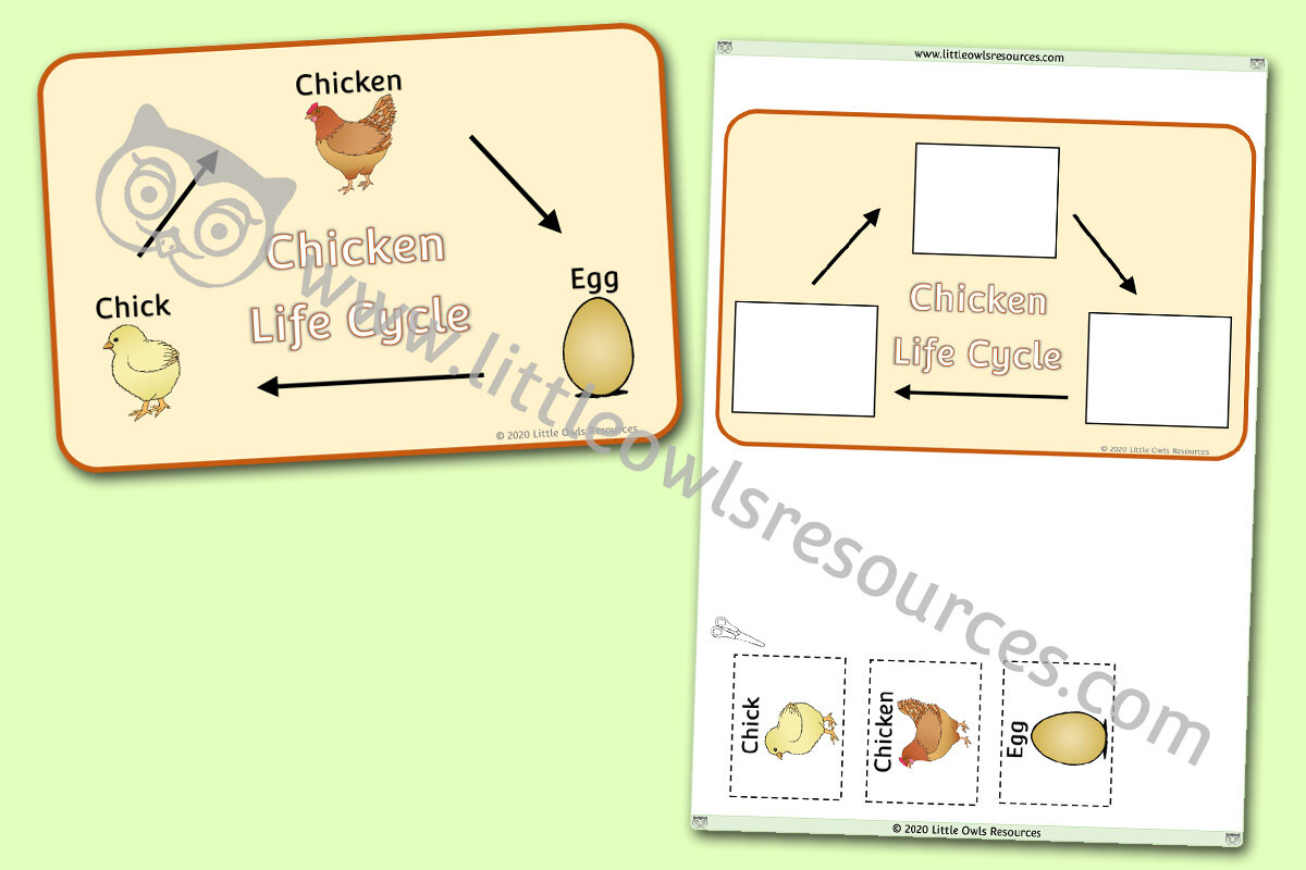 It's just a photo of Life Cycle of a Chicken Printable for real life