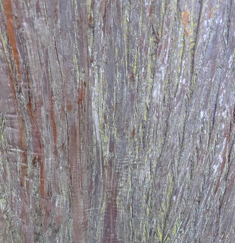 tea-garden-tree-bark.jpg